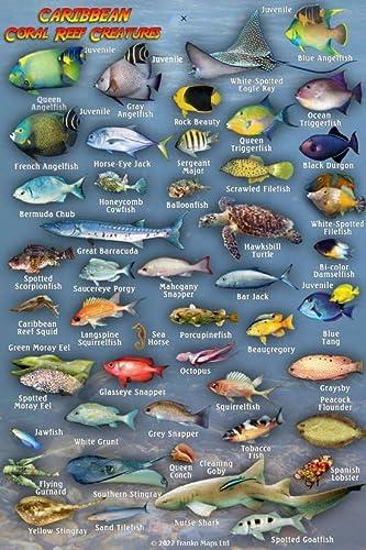 Caribbean Sea Reef Creatures Guide Franko Maps: Franko Maps Ltd.