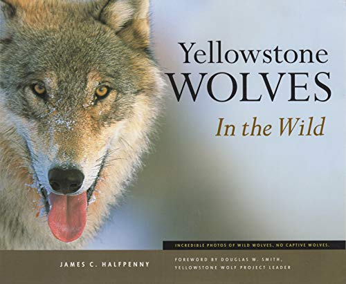 9781931832267: Yellowstone Wolves in the Wild
