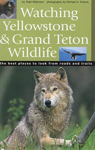 Watching Yellowstone & Grand Teton Wildlife: Wilkinson, Todd