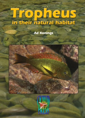 TROPHEUS in their Natural Habitat (Tanganyika Cichlids) (1932892125) by Ad Konings