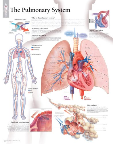 The Pulmonary System chart: Laminated Wall Chart: Scientific Publishing