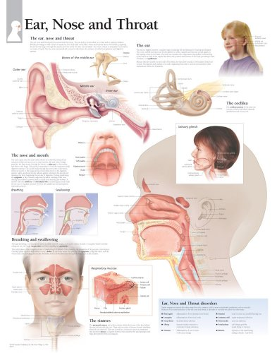 Ear, Nose and Throat Chart: Wall Chart: Scientific Publishing
