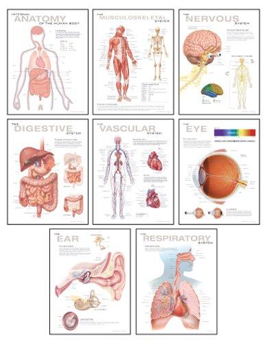 Human Anatomy Chart Pack: Wall Chart: Scientific Publishing