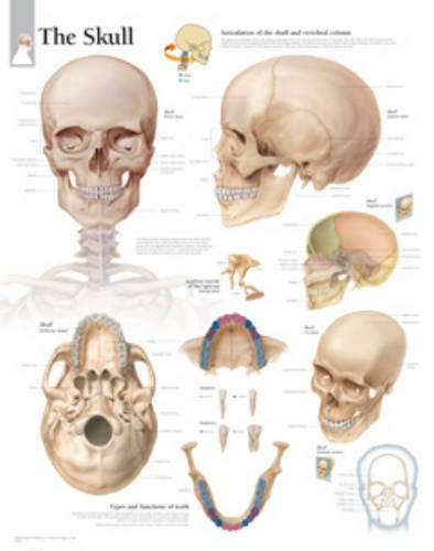 9781932922882: Skull Paper Poster