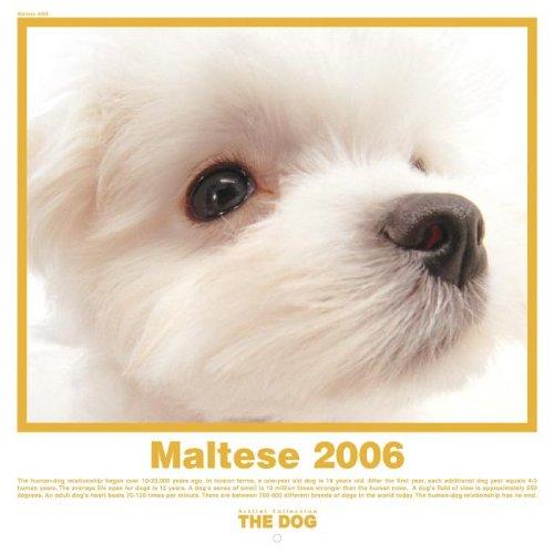 9781933131221: The Dog Maltese (Artlist Collection)