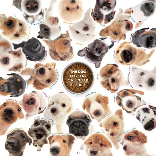 9781933131429: The Dog All-Star (Artlist Collection)