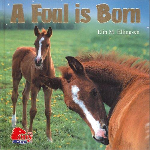 A Foal is Born: Elin M. Ellingsen