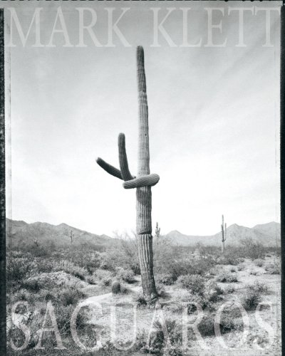 Mark Klett: Saguaros: McNamee, Gregory