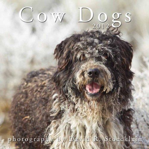 9781935269281: 2012 Cow Dogs Calendar