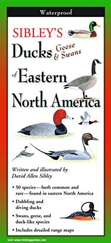 Sibley s Ducks, Geese, and Swans of: David Allen Sibley