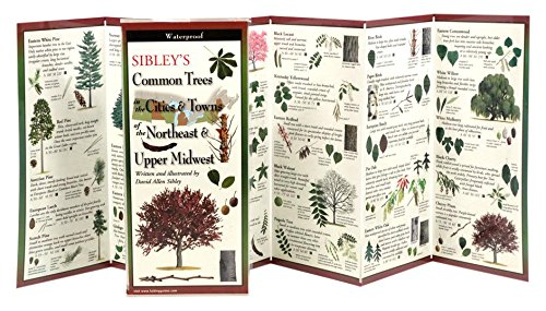 9781935380498: Sibley's Common Trees in the Cities & Towns of the Northeast & Upper Midwest