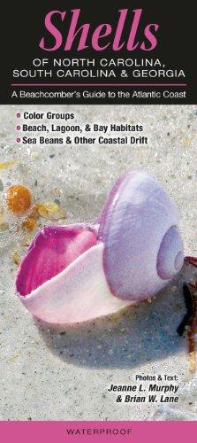 Shells of North Carolina, South Carolina &: Jeanne L. Murphy