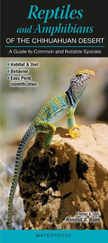 9781936913718: Reptiles & Amphibians of the Chihuahuan Desert