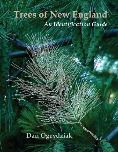 9781937146306: Trees of New England: An Identification Guide