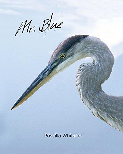 9781939371027: Mr. Blue