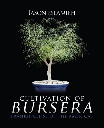 9781939828095: Cultivation of Bursera, Frankincense of the Americas