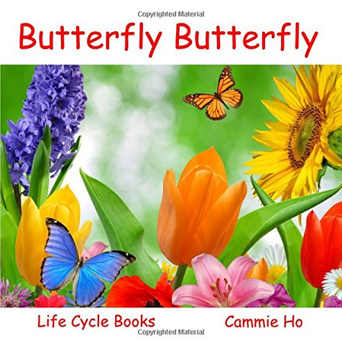 Butterfly Butterfly (Life Cycle Books): Cammie Ho