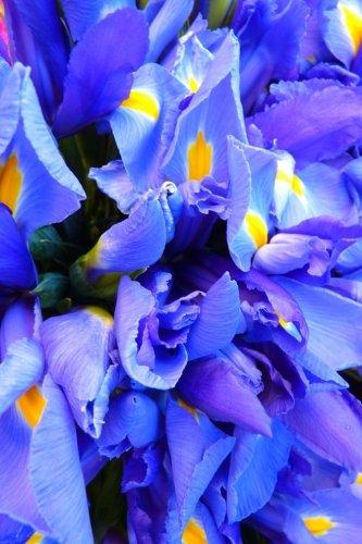 Royal Blue Iris in the Garden Journal: Journal, Garden Lovers