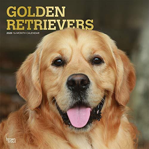 9781975407506: Golden Retrievers 2020 Square Wall Calendar