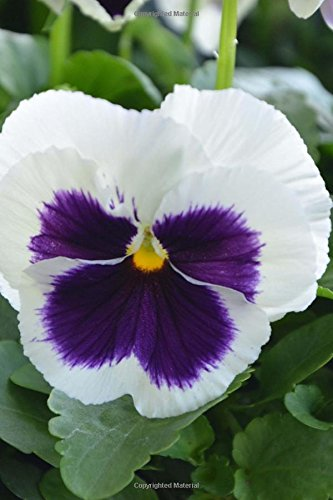 A Charming White and Purple Pansy Flower: Creations, Cs