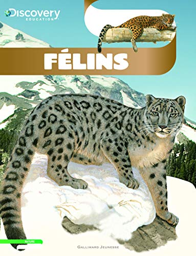9782070641529: Discovery Education: Felins (French Edition)