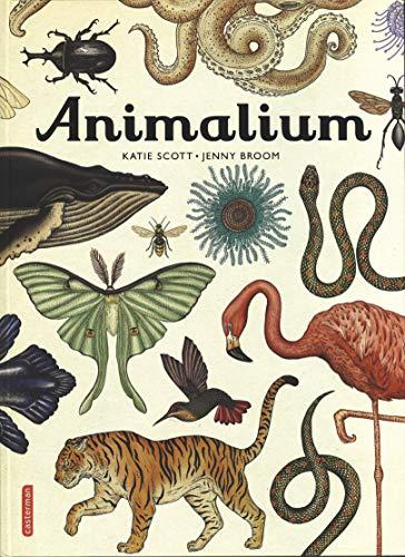 ANIMALIUM: SCOTT KATIE