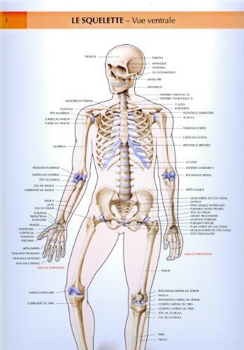 9782224021160: Le corps humain, planches murales d'anatomie. Le squelette, vue centrale