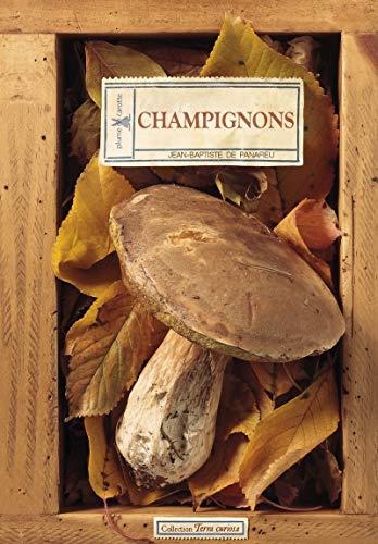 CHAMPIGNONS: PANAFIEU DE