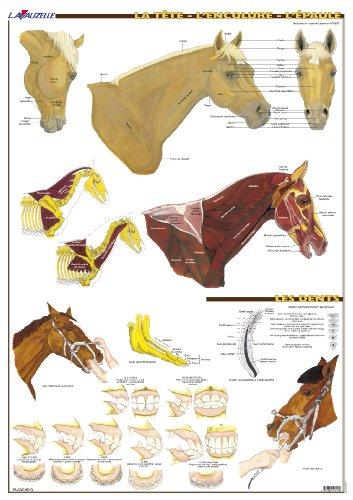 9782702515495: Planche Hippologie - La Tête, l'Encolure, l'Epaule du cheval