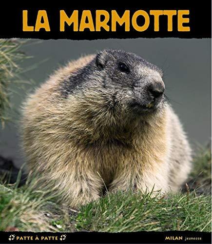 9782745922465: Marmotte (la) (Patte à patte)