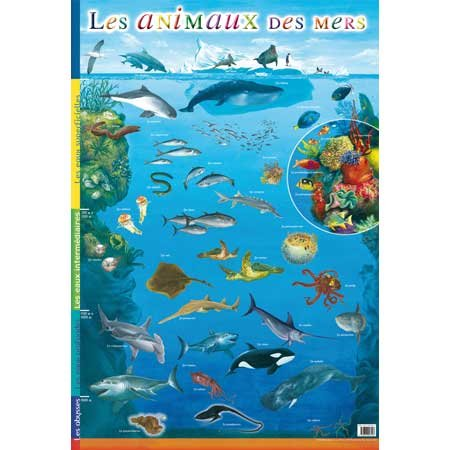 9782753007413: Posters Educatifs / la Mer