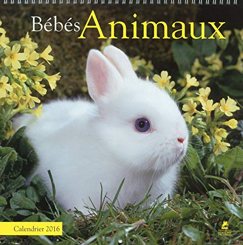 9782809912999: BEBES ANIMAUX CALENDRIER 2016