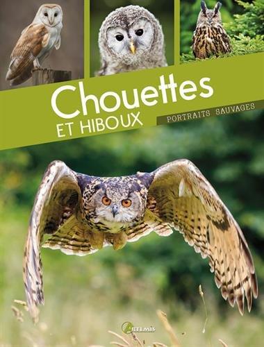 CHOUETTES ET HIBOUX: COLLECTIF