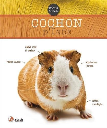 COCHON D'INDE: COLLECTIF