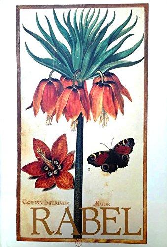 Daniel Rabel: Cent fleurs et insectes.: AYMONIN (G.)