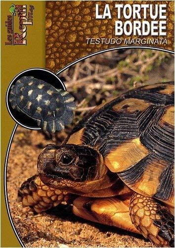 9782915740660: La Tortue Bord�e: Testudo Marginata