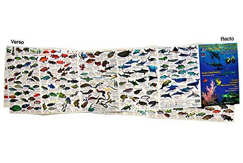 9782919322114: Découverte de la vie sous-marine : Océan Indien - Mer Rouge