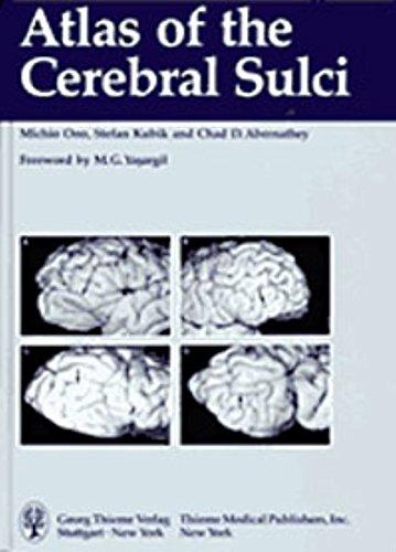 9783137321019: Atlas of the Cerebral Sulci