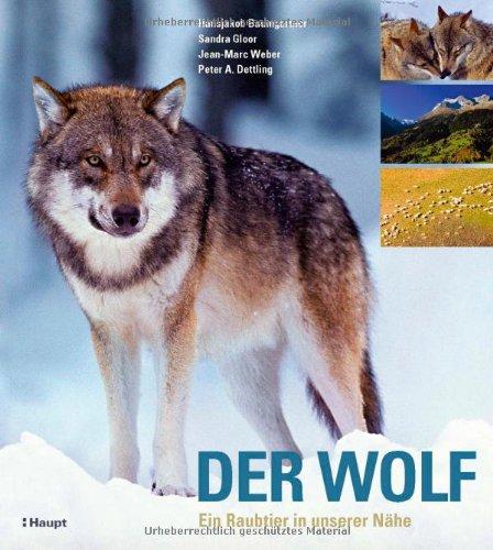 9783258072746: Der Wolf: Ein Raubtier in unserer Nähe