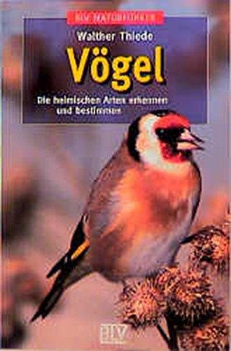 9783405151010: Vögel: Die heimischen Arten erkennen und bestimmen