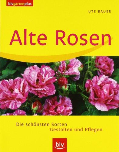 9783405168896: Alte Rosen: Die schönsten Sorten. Gestalten und pflegen