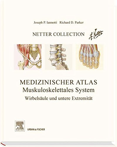9783437216350: Netter Collection Muskuloskelettales System 02
