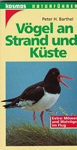 Vögel an Strand und Küste. Extra: Möwen und Wattvögel im Flug