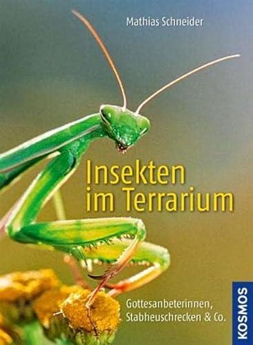 9783440122723: Insekten im Terrarium: Gottesanbeterinnen, Stabheuschrecken & Co