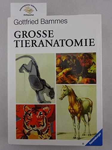 GROSSE TIERANATOMIE Gestalt - Geschichte - Kunst: Bammes, Gottfried