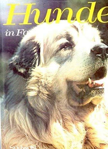 Hunde in Farbe: John Holmes, Margaret