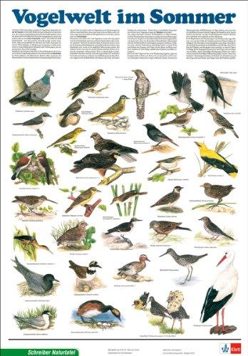 9783623830322: Vogelwelt im Sommer. Ausgabe C. Gerollt in Plastikfolie