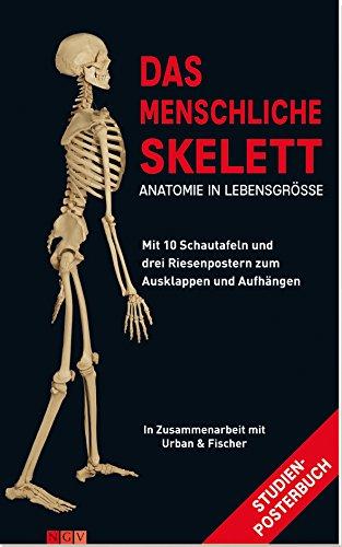 Das Menschliche Skelett - AbeBooks