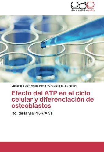 9783659054433: Efecto del ATP en el ciclo celular y diferenciación de osteoblastos: Rol de la vía PI3K/AKT (Spanish Edition)