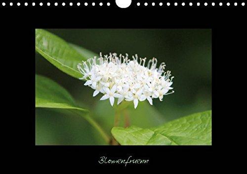 9783660020038: Blomenfrünn (Posterbuch DIN A4 quer): En Farv-Tuur för de Ogen (14 Seiten)